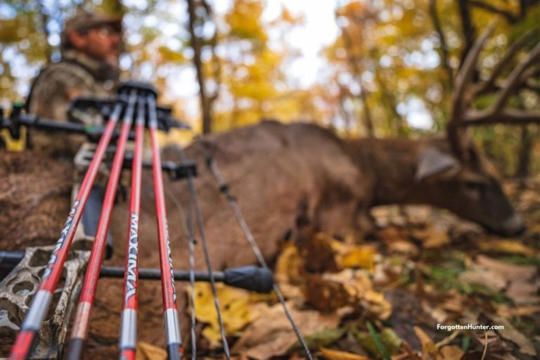 Best Arrows to Hunt Deer and Elk in 2021 - Buyer's Guide & Beginner's Guide